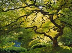 tree-leaf-canopy-1024x768