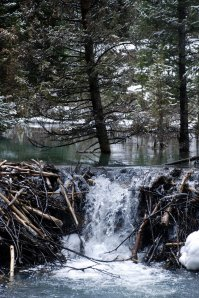 beaver-dam-761073