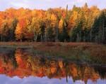 Autumn Foliage Along a Calm Lake