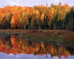 Autumn Foliage Along a Calm Lake