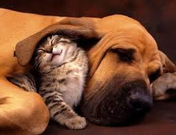 cat and dog together courtesy of fun-gall.blogspot.com